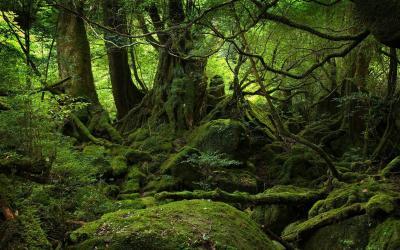 El bosque de los malditos