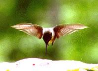 El néctar del olvido